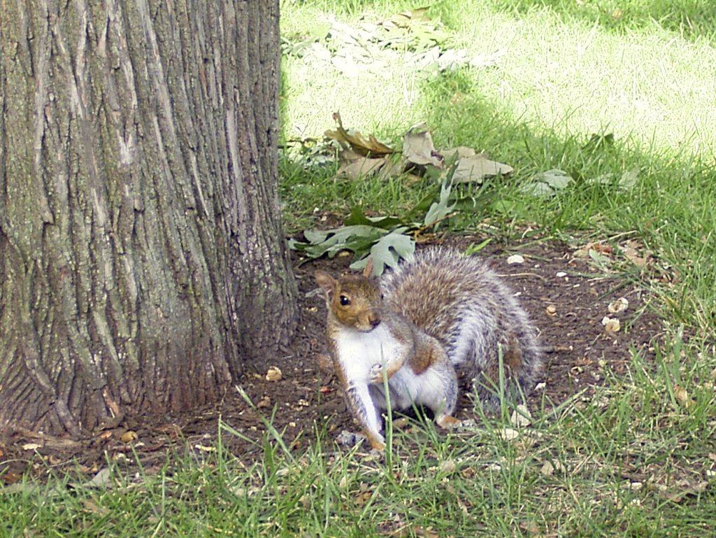A squirrel in town